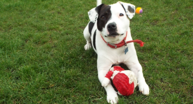 Dog from RSPCA in Leeds
