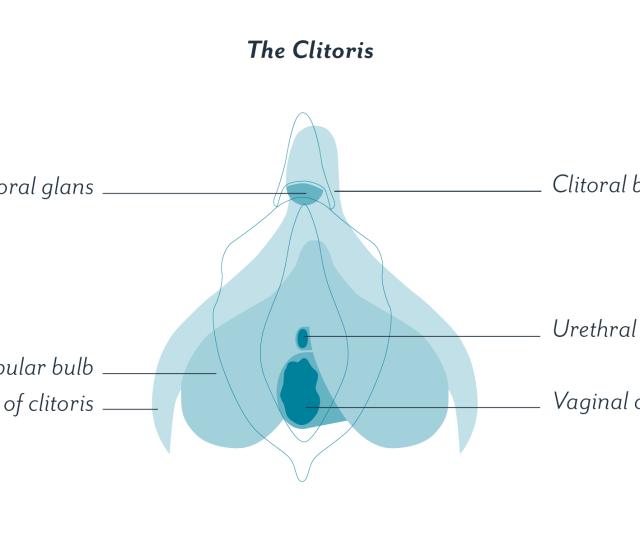 Clitoris Content X