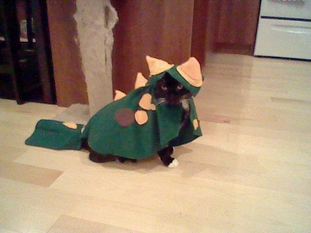 Cat Costume Dinosaur A Pet Accessory Construction