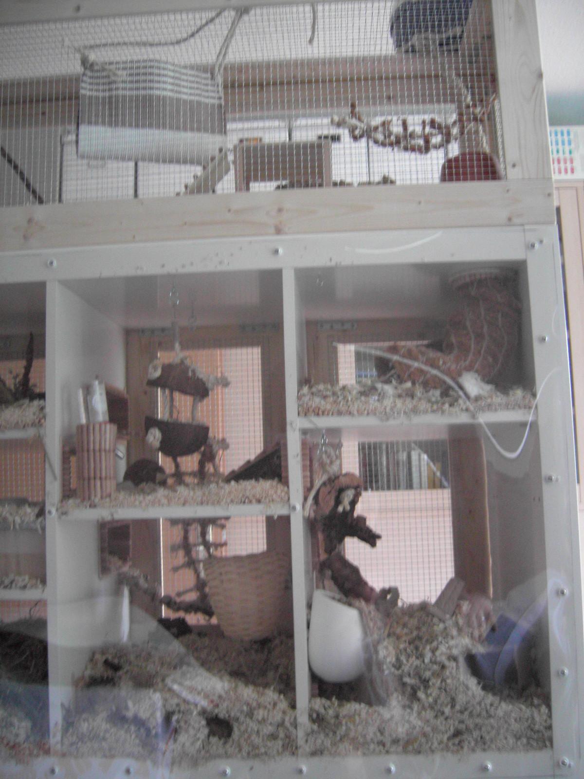 My Mouse Cage 183 An Aquarium Tank 183 Construction