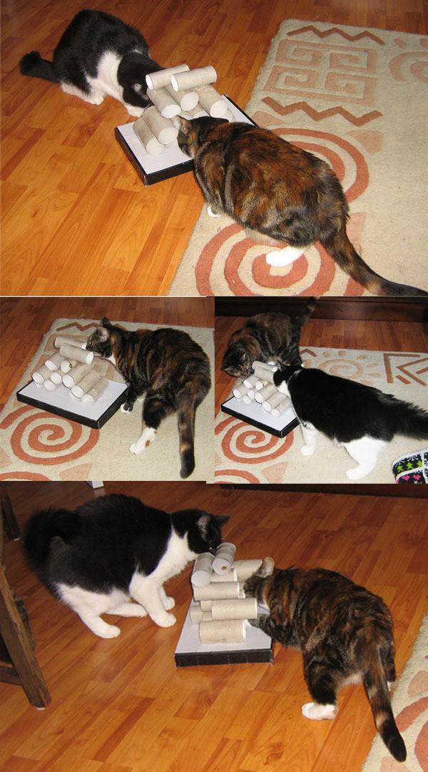 free cat tutorial # 63
