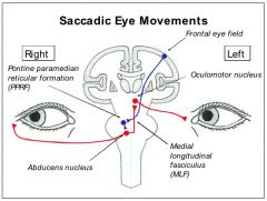 Neuroanatomy Lecture 29 Eye Movements Flashcards