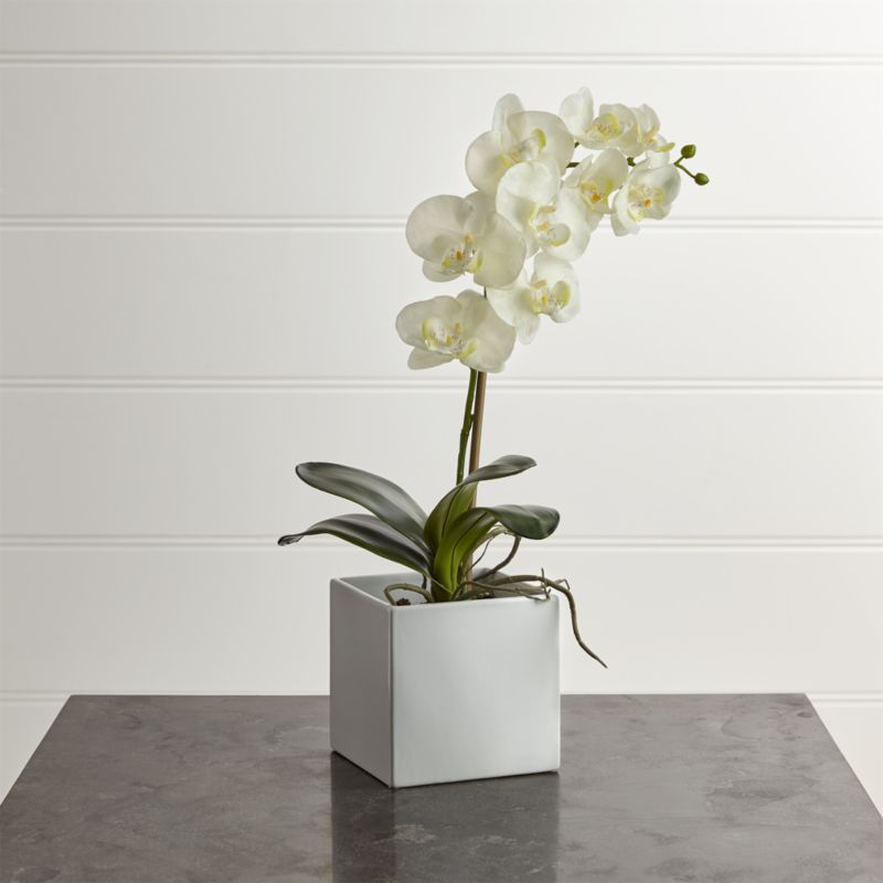 Large Artificial Orchid Reviews Crate And Barrel