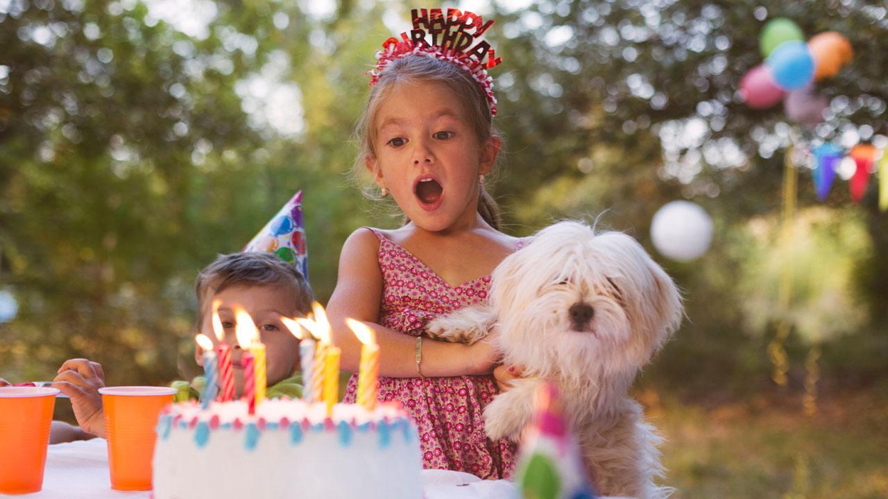 Free Birthday Video Maker Create Birthday Slideshows Animoto