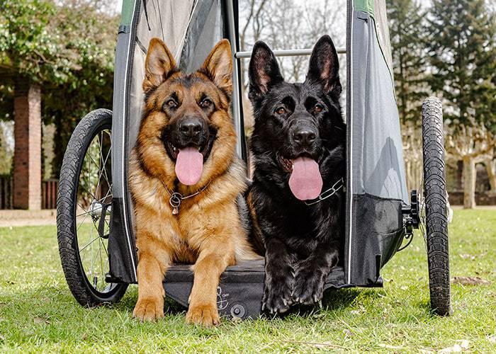 CROOZER Bruuno Dog XXL mit Welpenschutz | Hundeanhänger 2021 4