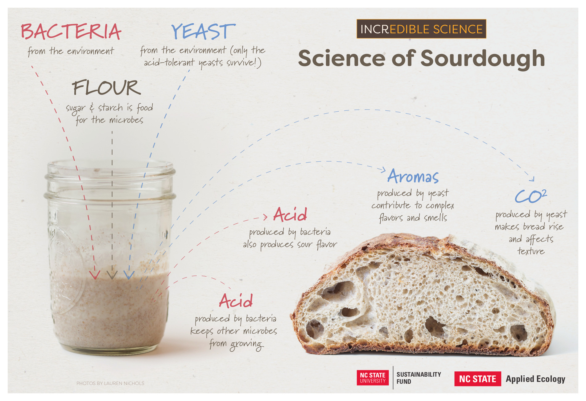 Science of Sourdough Infographic - Neil McCoy