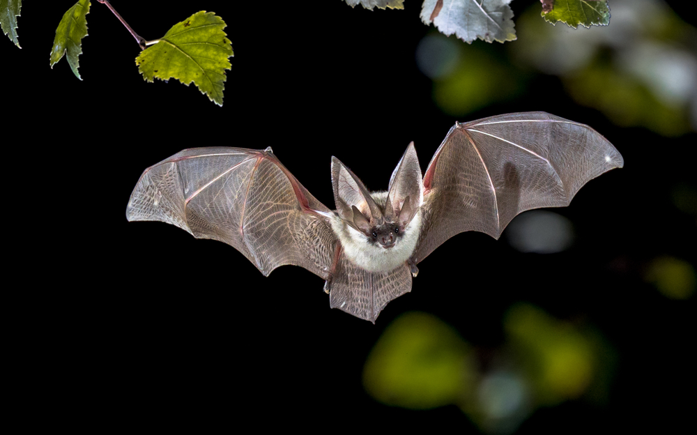 Birds And Bats Have Weird, Limited Microbiomes — And That Might Be Due To Flight