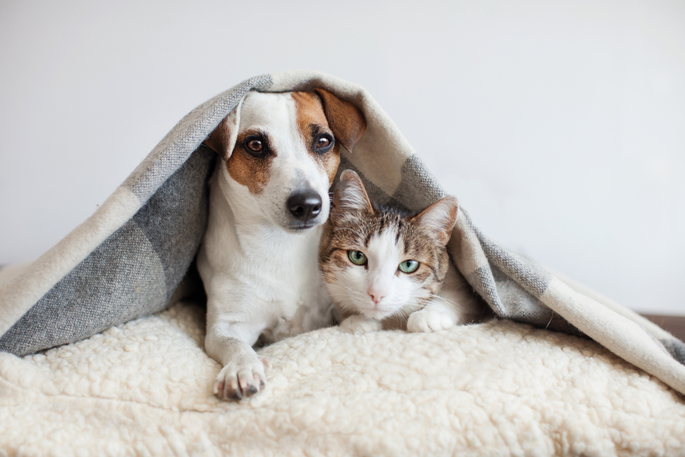 Zoonoses The Diseases Our Cats And Dogs Give Us Discover Magazine