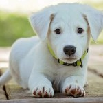 White Dog Names 100 Best Names For White Dogs Littlethings Com
