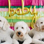 15 Pregnancy Announcements Ideas That Include Pet Dogs Cafemom Com