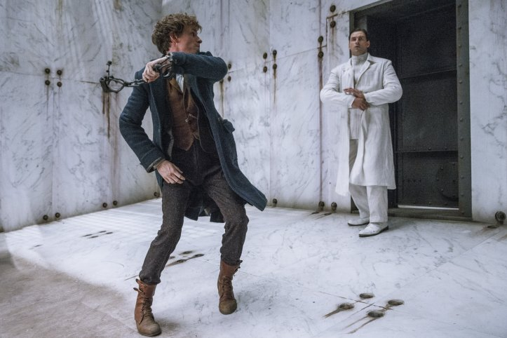 Why Newt Scamander and Harry Potter were different kinds of Chosen One 3