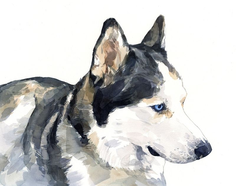 Hand Crafted Husky Dog Portrait Watercolor Painting By