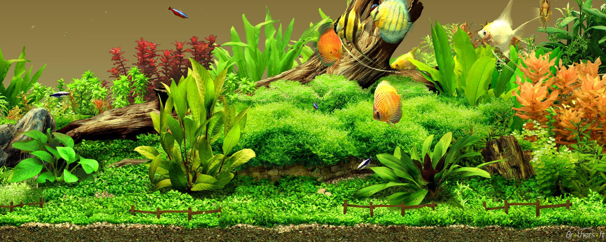 22 aquarium backgrounds wallpapers