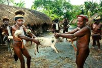 Memegangi babi sebelum dipanah (dok. Bayu Maitra/ACI)