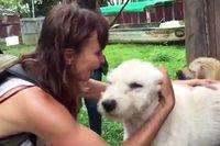 Saat Liburan, Traveler Ini Selamatkan Anjing yang Terlantar