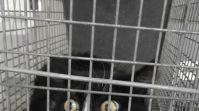 Uno de los gatos recogidos.