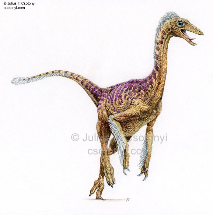 Dromiceiomimus Pictures Amp Facts The Dinosaur Database