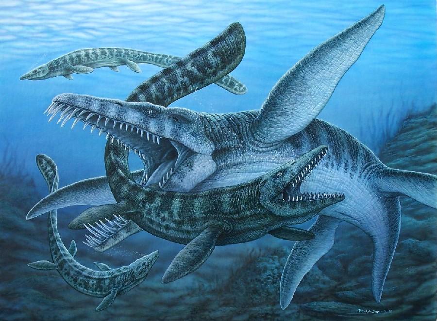 Prehistoric Whale Found