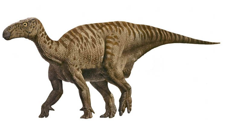 Image result for iguanodon