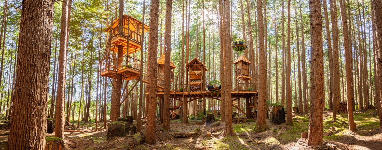 How Tree House Master Pete Nelson Built An Empire In The Woods Dwell