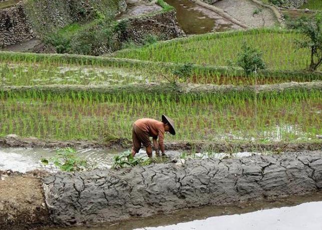 Batad, las milenarias terrazas de arroz filipinas amenazadas por el abandono