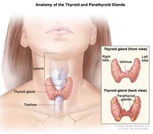 hypothyroidism treatment natural