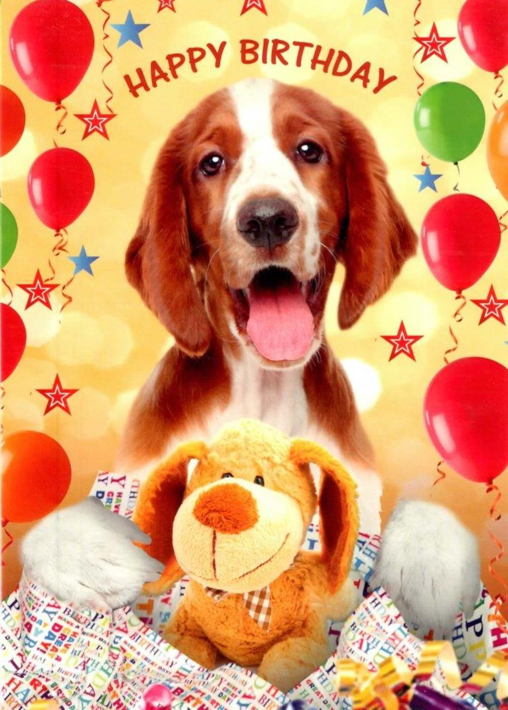 Cute Dog Happy Birthday Greeting Card Cards Love Kates