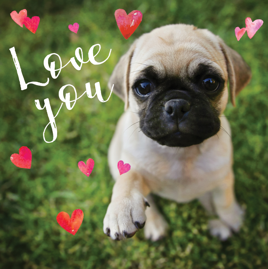 Pug Love You 3D Holographic Valentines Day Card Cards