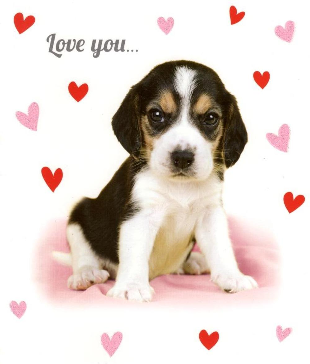 Love You Sooo Much Card Cute Puppy Valentines Card