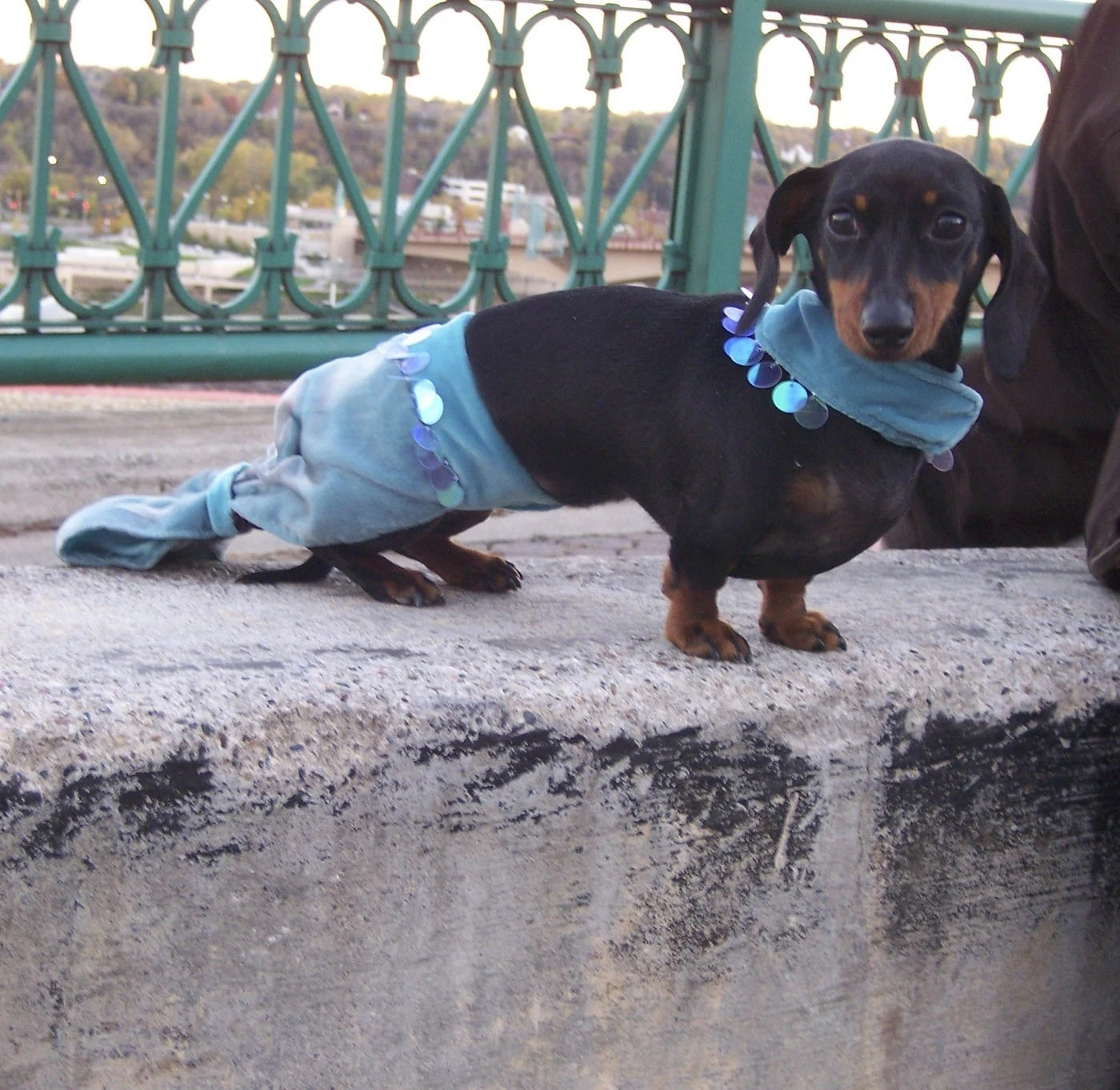 Mermaid Dachshund