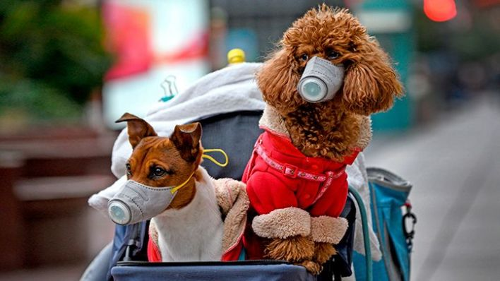 pets and coronavirus risk   everyday health