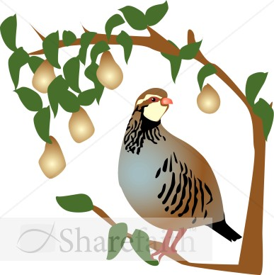 Partridge in a Pear Tree Clipart