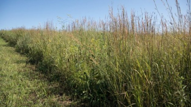 8-big-agriculture-is-trying-to-save-monarch-butterflies-813x457 Big agriculture helped destroy monarch butterfly habitats–now it's trying to save them Inspiration
