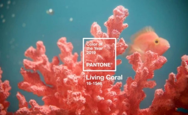 3-90272442-pantoneand8217s-color-of-2019-is-the-color-of-resistance-745x457 Millennial Pink is dead, and Pantone's Color of the Year killed it Interior