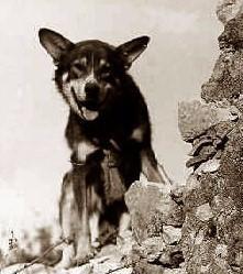 Image result for chips wwii war dog