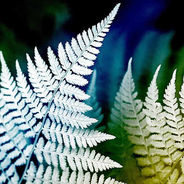 Blue Fern Leaf Art Prints for Sale
