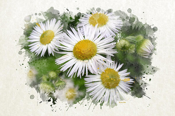 Daisy Watercolor Art Prints for Sale