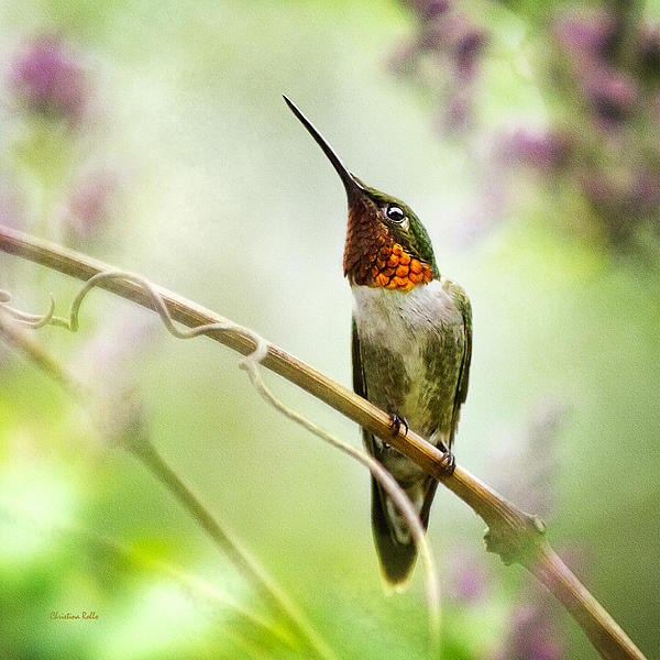 Hummingbird Looking For Love Square Art Prints for Sale