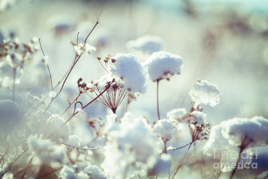 Winter Flowers Photograph by Monika Wisniewska Nature Photograph   Winter Flowers by Monika Wisniewska
