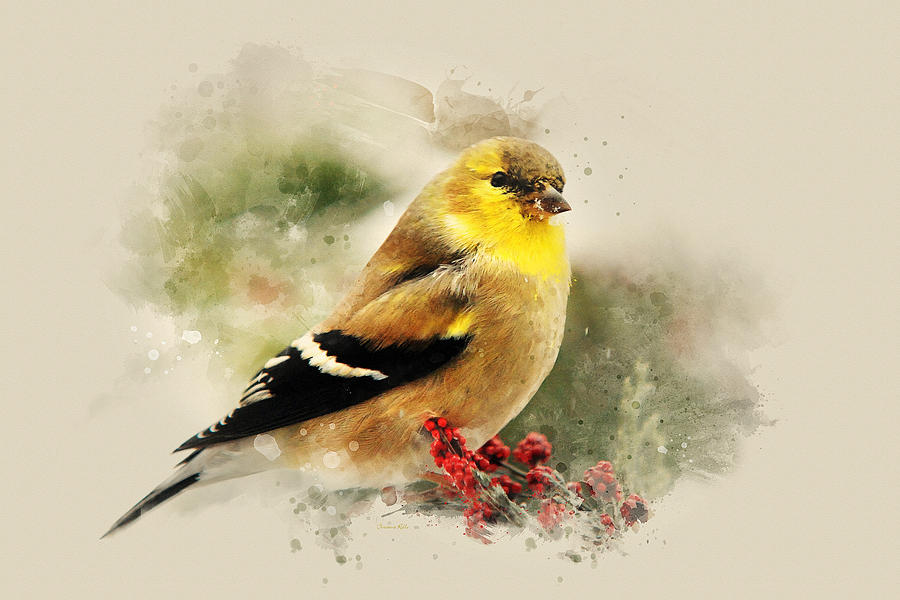Goldfinch Watercolor Art by Christina Rollo