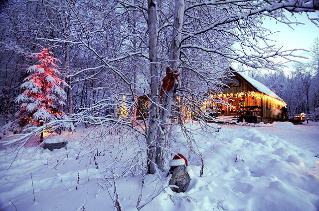 Interior Alaska Christmas Photograph By Tom Schneider