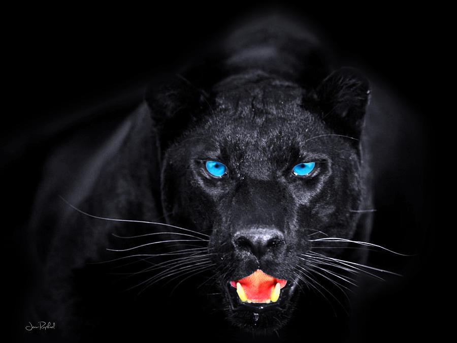Panther Digital Art By Jean Raphael Fischer