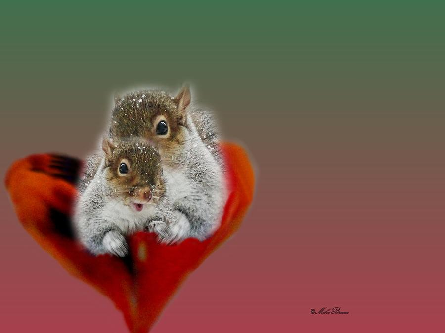 Squirrels Valentine Photograph By Mike Breau