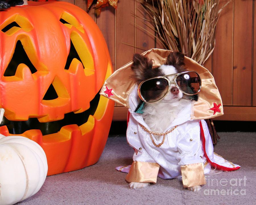 Halloween Dog Portraits Chihuahua Photograph By Renae