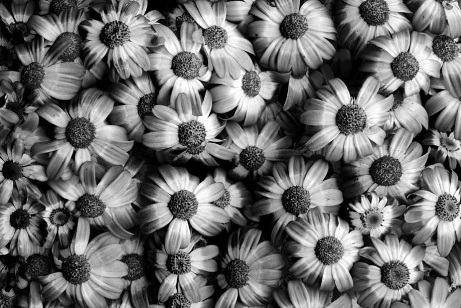 Black And White Flowers Photograph by Sumit Mehndiratta Flowers Photograph   Black And White Flowers by Sumit Mehndiratta