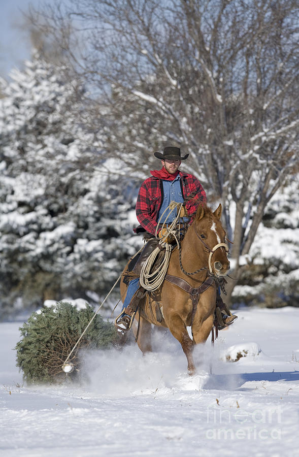Cowboy Christmas By Carol Walker