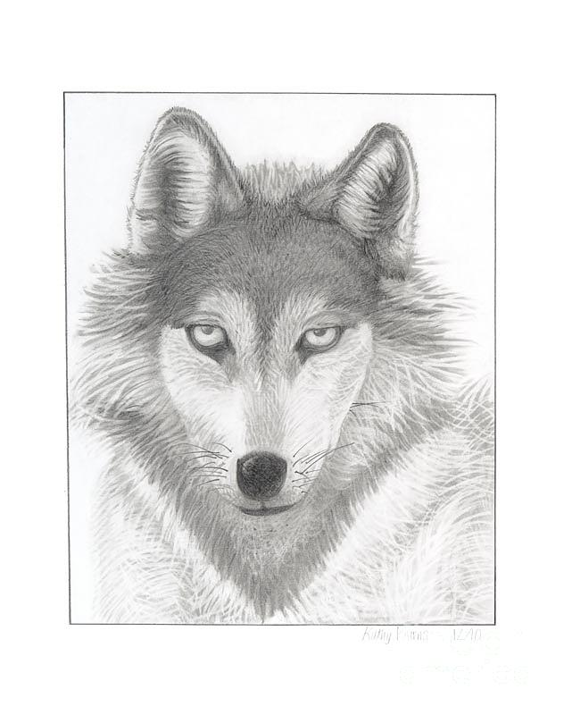 Lone Wolf Drawing By Kathy Burns
