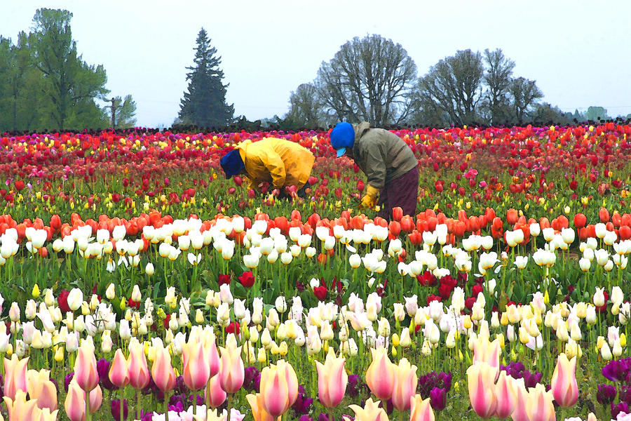 https://i2.wp.com/images.fineartamerica.com/images-medium-large/migrant-workers-in-the-tulip-fields-margaret-hood.jpg