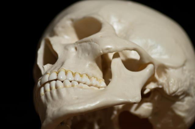 Skull Side Profile Alex Rios