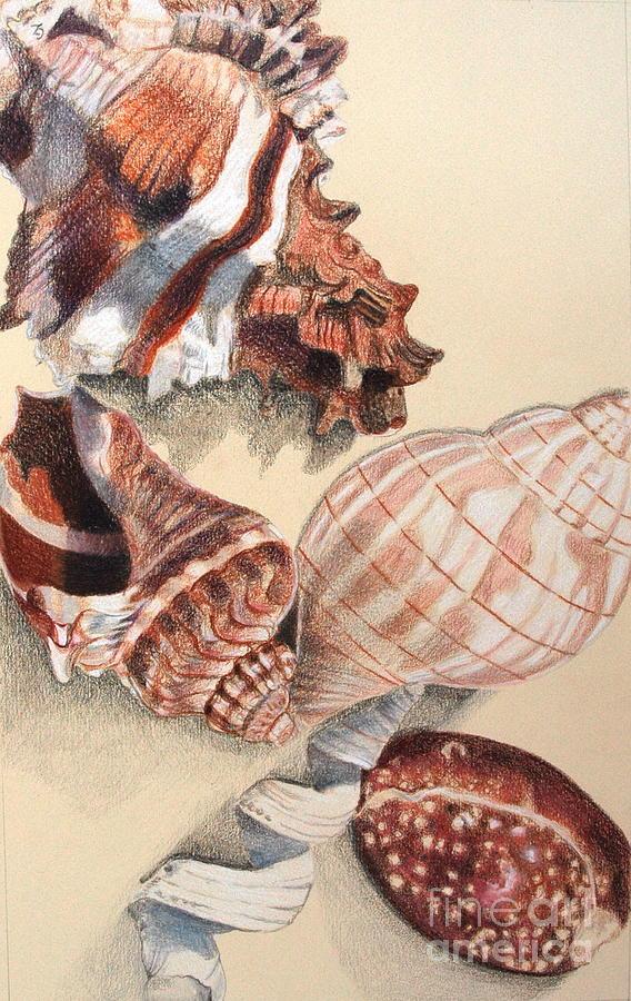 Vertical Conch Shells Drawing By Glenda Zuckerman